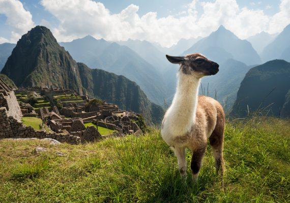 Full Day: Machu Picchu - Inca Rail - machu picchu